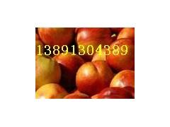 陜西油桃產地\曙光油桃\曙光黃壤油桃批發\黃肉油桃銷售行情
