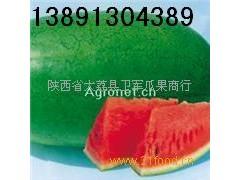 陜西西瓜產地價格\特大新紅寶西瓜批發\綠皮新紅寶西瓜銷售行情