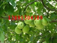 陜西青蘋果價格陜西晨陽蘋果行情陜西夏紅蘋果批發陜西藤木蘋果