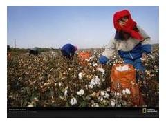 手持式棉花采摘機 棉花收獲機 棉花收割機 小型采棉機價格