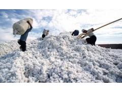 采棉機 便攜式棉花采摘機 大型棉花收割機 大型棉花收獲機