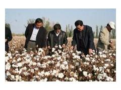 單人便攜式棉花采摘機 便攜式電動采棉機 便攜式電力采棉機