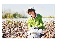 我愛發明小型采棉機 棉花采摘機多少錢 棉花采摘機視頻