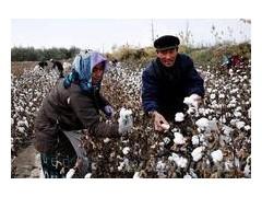 大型棉花采摘機價格 進口大型棉花采摘機 倍利特采棉機