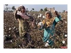 采棉機 約翰迪爾采棉機 新疆進口采棉機 新疆大型采棉機