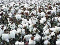 我愛發明棉花采摘機 倍力特棉花采摘機 大型棉花采摘機價格