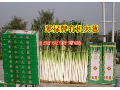 章丘大蔥種子 全國畝產第一高產新品種 家祿三號 山東大蔥種子
