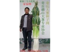 大蔥種子 山東大蔥種第一品牌 家祿牌抗重茬 章丘大蔥種子