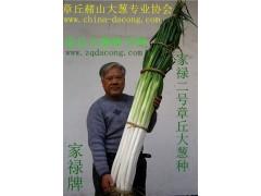 大蔥種子高產新品種家祿三號 山東大蔥種第一品牌 章丘大蔥種子
