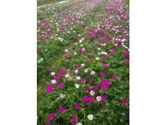 山东青州花卉市场