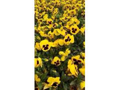 青州花卉市场