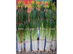 章丘大蔥種 山東大蔥種第一品牌 家祿三號 高產新品種大蔥種子