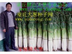 章丘大蔥種子 全國畝產第一品牌 家祿三號 新品種山東大蔥種子