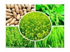 草木灰改性生产多元素复混肥料技术和设备