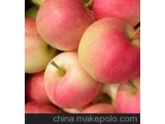 嘎拉苹果、膜袋嘎拉苹果、纸袋红富士苹果供应商