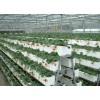大棚基质草莓种植槽,农业大棚草莓栽培槽