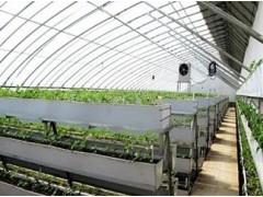 草莓立体栽培槽种植草莓就是好