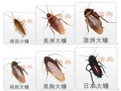 專業殺蟑螂公司