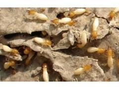 白蟻防治找哪里