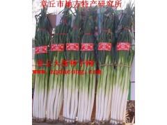 超高產章丘大蔥種子 山東大蔥新品種 家祿三號 抗重茬大蔥種子