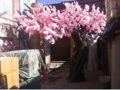 北京仿真树订做仿真桃花树租凭150106007400