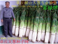 章丘大葱种子第一高产新品种 家禄三号 抗重茬山东大葱种子