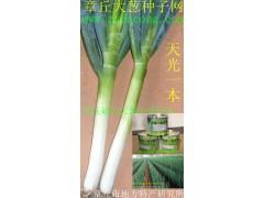 日本大葱种子 井冈长宝天光晚抽冬越日本钢葱 日本铁杆大葱种子