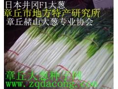 大葱种子 山东大葱第一高产新品种 家禄三号抗重茬章丘大葱种子