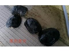 霸州批量出售石金錢種龜