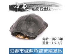 怎样养石金钱龟今年养殖石金钱龟富裕