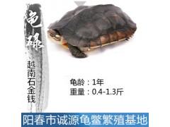 烟台南石种龟价格