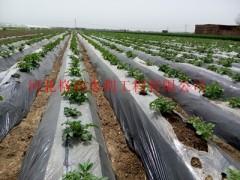 膜下软管,高效节水灌溉|河南大棚的不二选择
