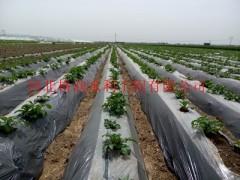 河南黄瓜专用黑色滴水毛管|规格齐全 |滴水带厂家直销