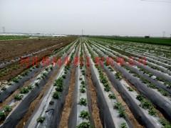 滴灌带_河南洛阳大田蔬菜的节水灌溉