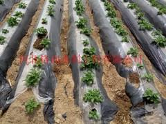 滴灌带  专供河南农业灌溉节水设备
