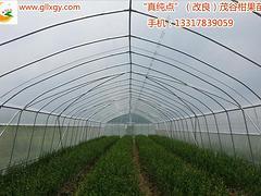 优质桂?#32622;?#35895;柑苗真纯点改良茂谷柑专业供应_湖南红阳猕猴桃