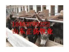 山東德州肉驢廠家正揚牧業最專業