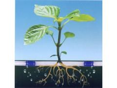 潍坊专业的滴灌带提供商 山东滴灌带