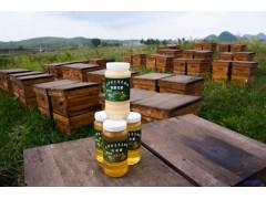小河贵阳蜂蜜哪家好:供应贵阳热卖油菜花蜜