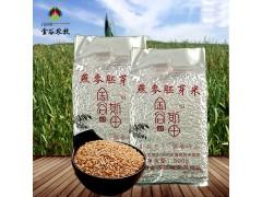 内蒙古优质燕麦胚芽米500g厂家直销