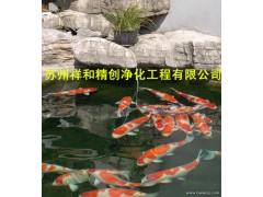 蘇州專業的魚池水處理公司,當屬祥和精創凈化工程_魚池水處理魚池水發綠青苔供應