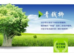 沙田江西神茶集團青錢柳:哪兒有批發物超所值的青錢柳神茶
