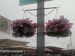 新式立体灯杆花盆:潍?#25381;?#21697;质的灯杆吊盆哪里有供应
