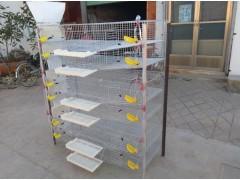 【推薦】山東鵪鶉籠——濟寧哪里有供應價格實惠的鵪鶉集蛋籠