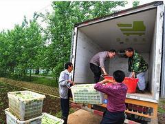 【荐】高质量的蔬菜配送|武汉蔬菜配送公司