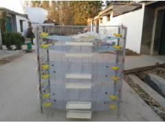 【推薦】榮進籠具廠優質的鵪鶉籠批發|鵪鶉集蛋籠廠家直銷