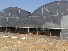 出口蔬菜大棚设计公司|福建规模大的温室大棚加工厂家