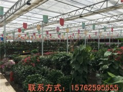 超值的温室大棚建造厂家 花卉温室大棚