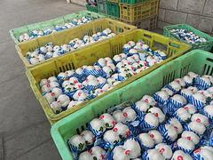 兰州物超所值的兰州鲜百合批发供应|银川兰州鲜百合