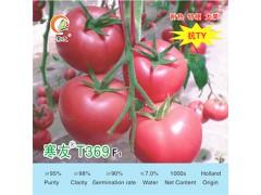 想要批发优良的【番茄种子】哪里有?就来【格瑞特】,果实酸甜可口,口感纯正!,